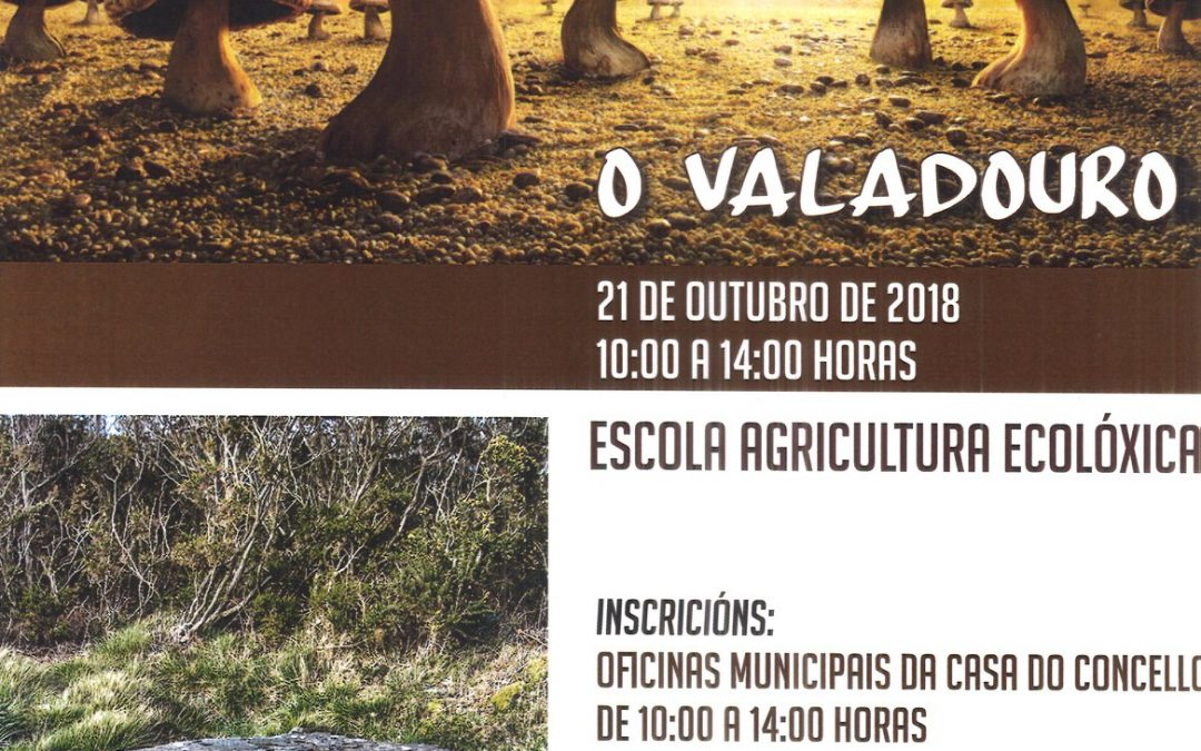 CURSO DE INICIACIÓN Á MICOLOXÍA 2018